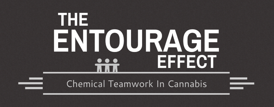 The Entourage Effect and CBD: What Does It Mean?